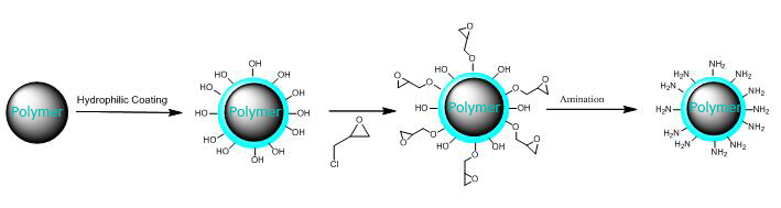 Amino Treated Magnetic Polystyrene Microspheres